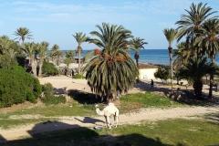 Green Tunisia